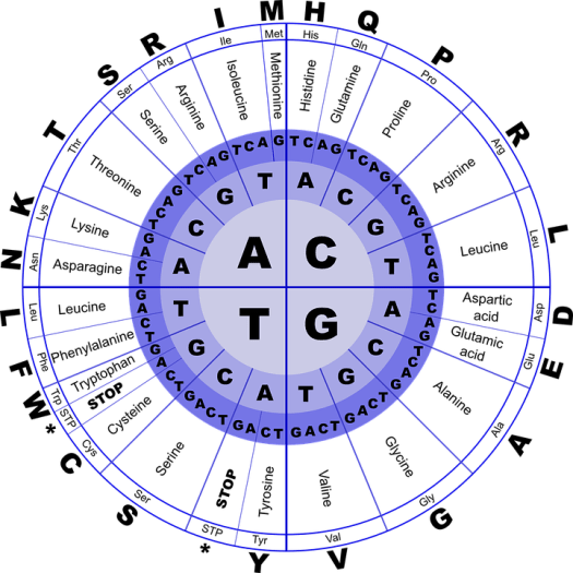 Dna, Aminoacidi, Biologia, Codice, Genetica, Molecolare