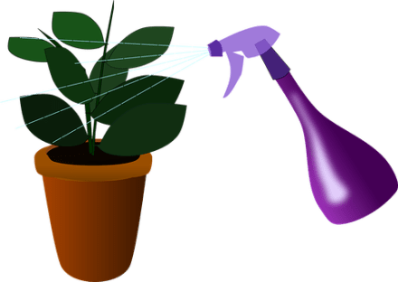Houseplant, Plant, Watering, House Plant
