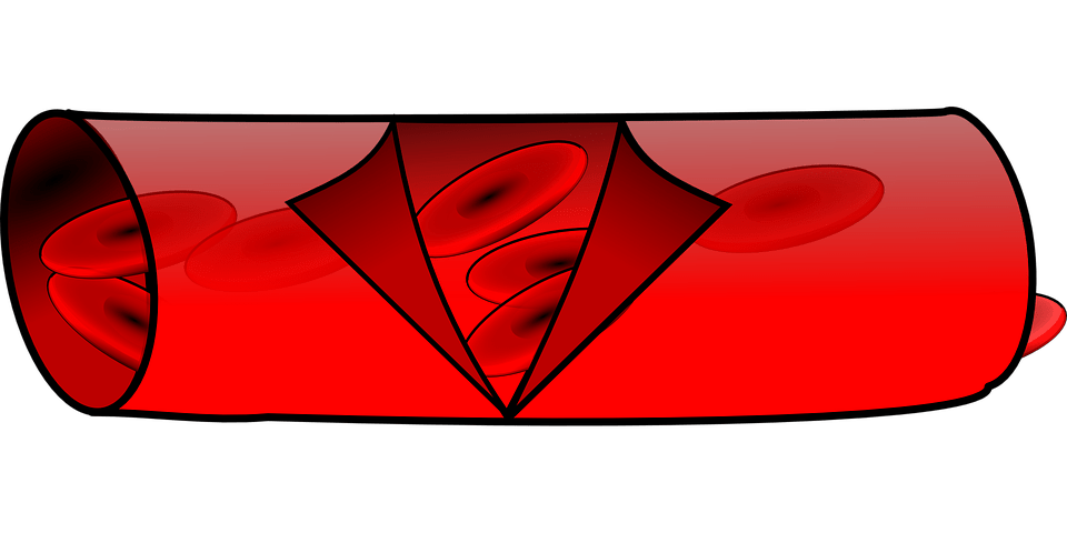 Free Vector Graphic Anatomy Blood Vessel Red Free