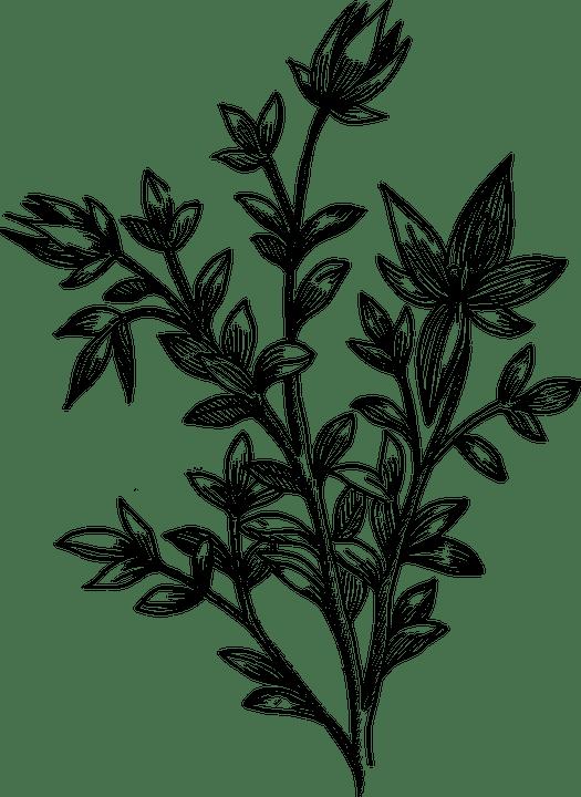 Blume Biologie Pflanze Kostenlose Vektorgrafik Auf Pixabay