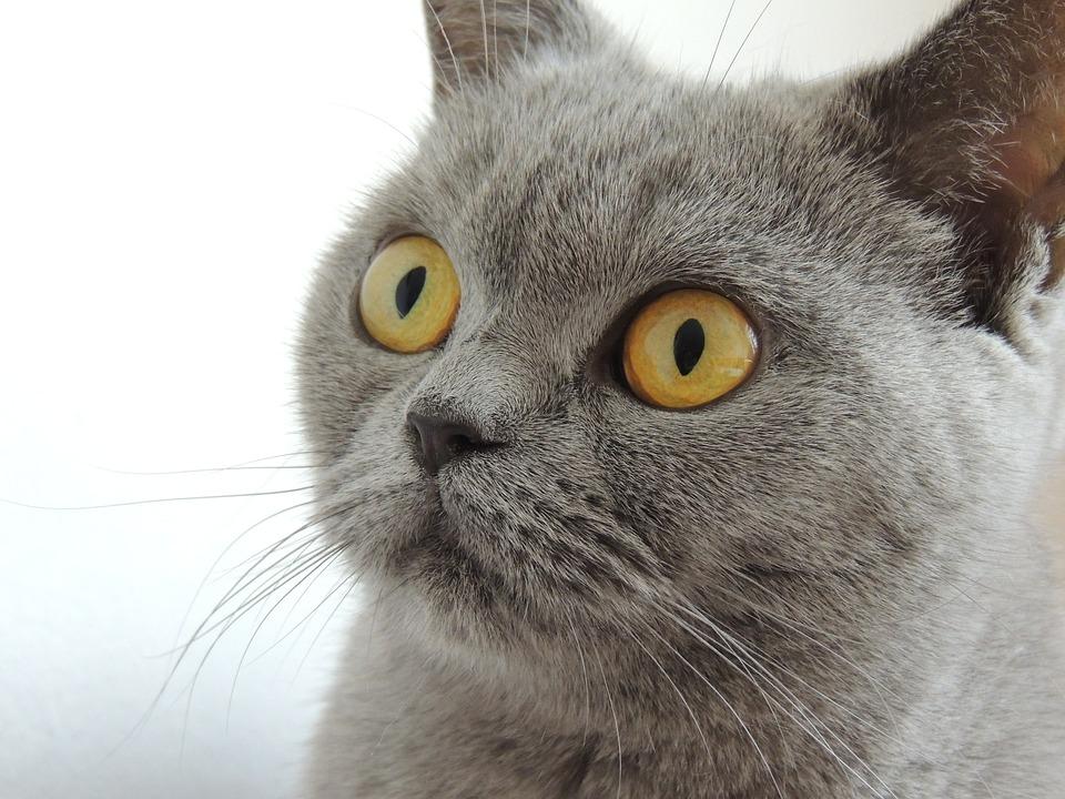 Image Result For Cat Allergies Symptoms