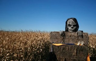 Skeleton, Halloween, Spooky, Skull