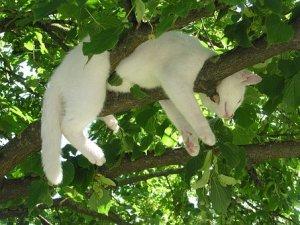 猫, リラックス, リラクゼーション, 残り, 自然, セレニティ