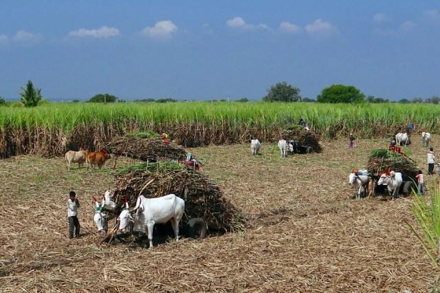 Coronavirus India: Agriculture Continues
