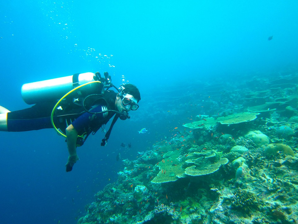 Free Photo Diving Maldives Sea Ocean Free Image On