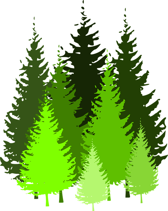 The tree size varies depending on the soil and weather condition. Trees Conifers Coniferous Free Vector Graphic On Pixabay