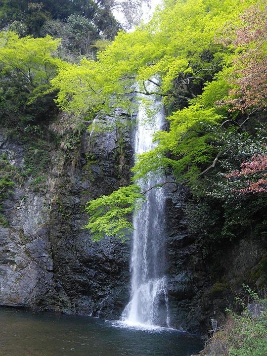 滝, 箕面, 箕面滝, 箕面大滝, 新緑, もみじ, カエデ