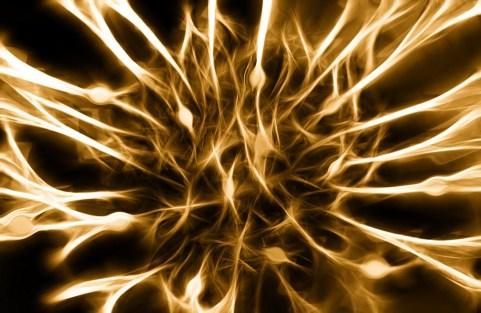 Nervi, Cellule, Seppia Dendriti, Eccitazione, Cervello