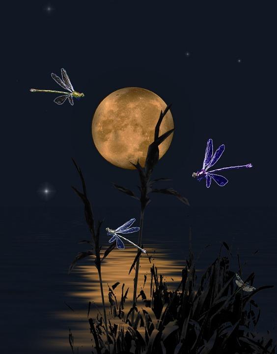 Free Illustration Dragonflies Dragonflies Dance Free