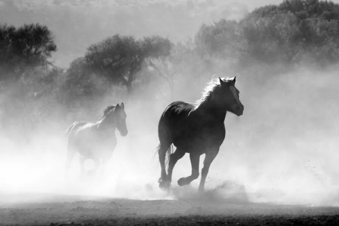 Horses, Herd, Galloping, Running, Stallions, Smoke