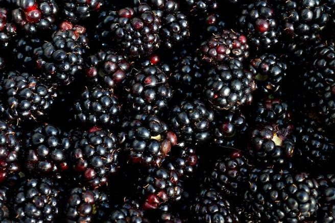 Blackberry, Berry, Fruit, Picking, Fresh, Sweet, Ripe