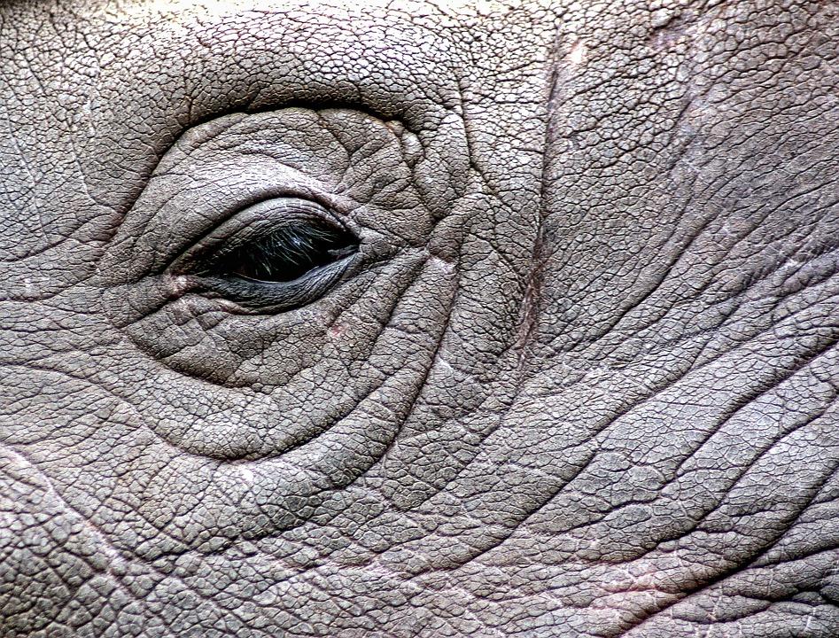Rhinoceros Rhino Eye Free Photo On Pixabay