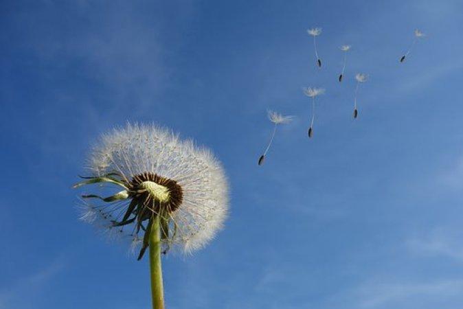 タンポポ, 空, 花, 自然, 種子, 植物, スプリング, クローズ