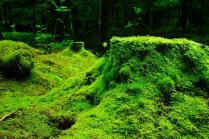 Forest, Moss, Nature, Lush, Green