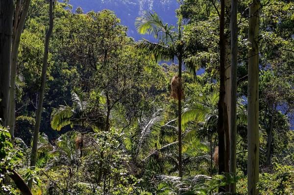 Kostenloses Foto Regenwald Wald Australien