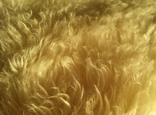 Free Photo Wool Fur Hair Soft Fluffy Free Image On
