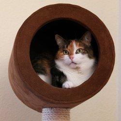 猫, 動物の肖像画, 国内の猫, 幸運の猫, Kratzbaum, 洞窟