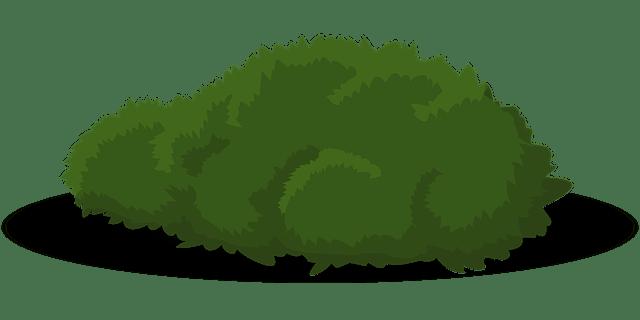 Bush Grün Strauch · Kostenlose Vektorgrafik Auf Pixabay