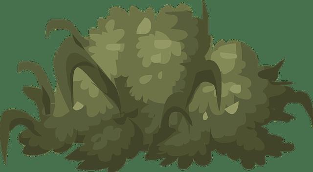 Free Vector Graphic: Bush, Shrub, Green, Plant, Nature