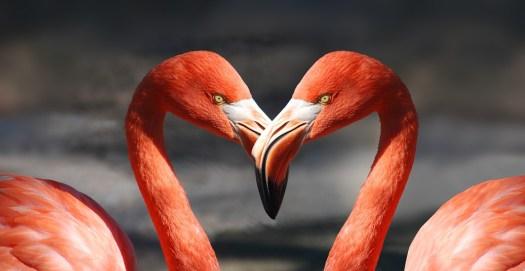 Flamingo, San Valentino, Cuore, Amore, Romantica