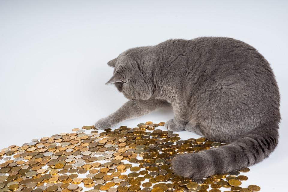 猫, 子猫, 動物, ペット, 驚き, マネー, コイン