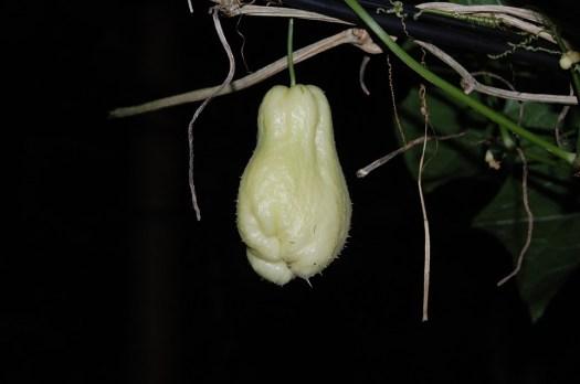 Fruta, Legumes, Chuchu