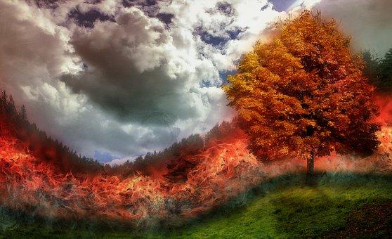 Fuoco, Marca, Incendio Nella Foresta