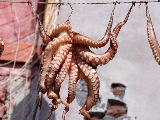 Calamari, Polpo, Pesce, Meeresbewohner, Secco