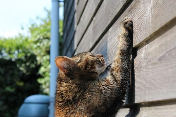 Cat, Scratching, Sun, Pet, Scratch, Paw, Feline, Claws