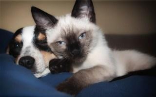 Alprazolam o Xanax para perros y gatos, ¿es recomendable?