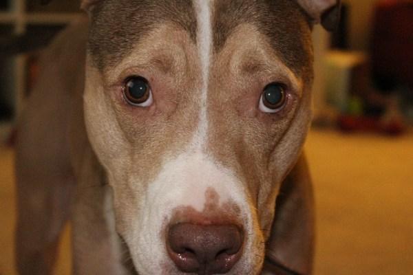 Free photo Dog Sad Pet Animal Puppy Cute Free