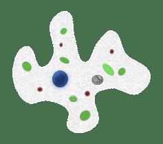 Amoeba, Tiny, Cell, Microscopic, Life