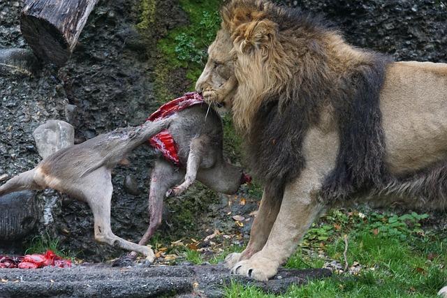 White Tiger Eating Monkey