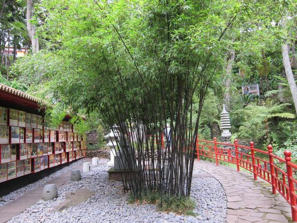 japanese gardens with bamboo Free photo: Bamboo Garden, Bamboo, Oriental - Free Image