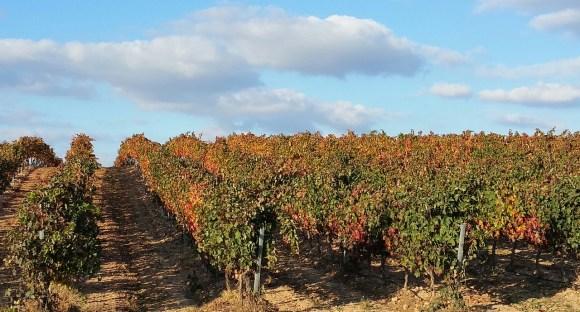 La rioja Best wine regions in Europe