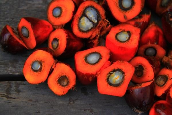 olio di palma lista degli ingredienti elenco spesa