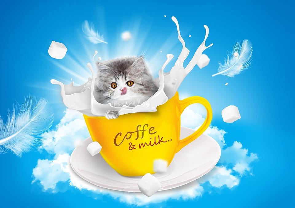 Cat Milk Teacup Free Photo On Pixabay