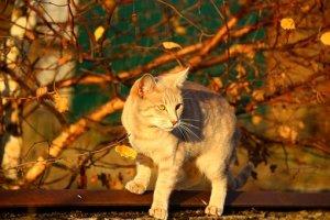 猫, 秋, 夜の光, 紅葉, Mieze, 葉, 子猫