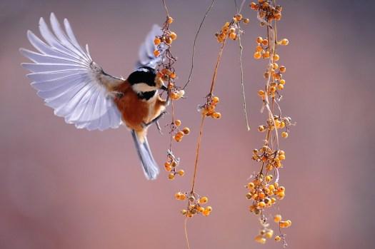Uccello, Ali, Svolazzanti, Natura, Animale