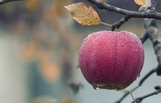 Apple, Caduta, Succosa, Cibo, Autunno, Frutta, Red