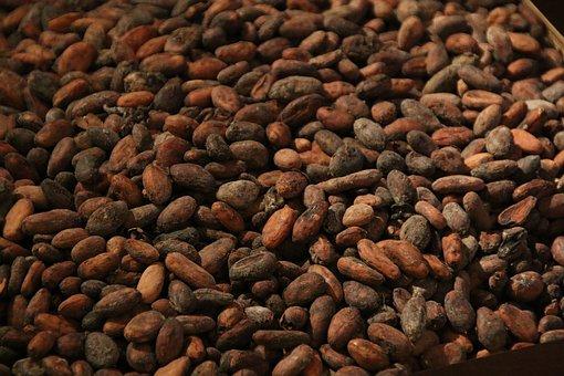 Kakao, Bohne, Rösten, Schokolade