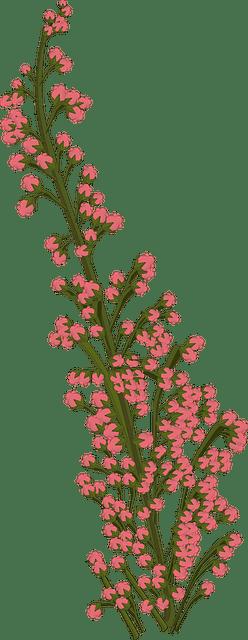 Flower Pink Plant 183 Free Image On Pixabay