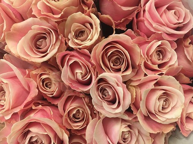 Rose Blume Blumen Rosa Kostenloses Foto Auf Pixabay