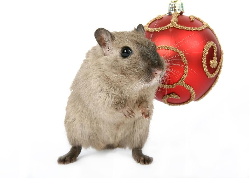 Free Photo Animal Celebration Christmas Free Image On