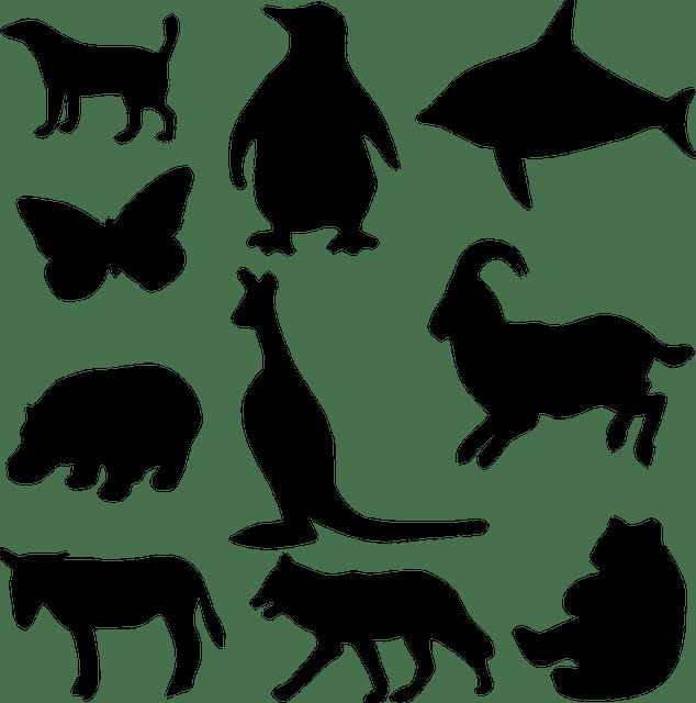 mewarnai oyeye kleurplaat leeuw pixabay