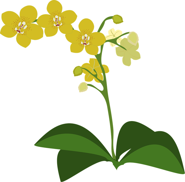 Free Vector Graphic Clip Art Flor Flora Flower Free