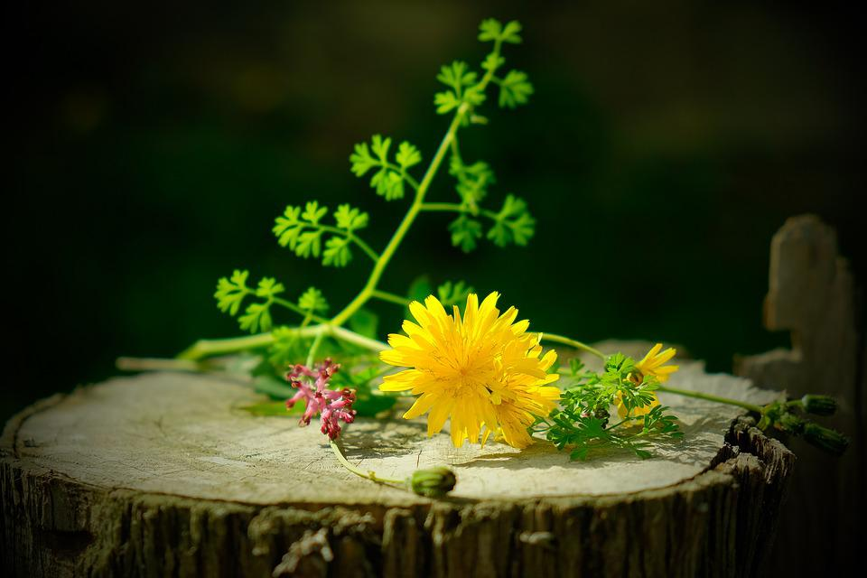 Nature Morte Fleurs Sauvages Fleur Photo Gratuite Sur