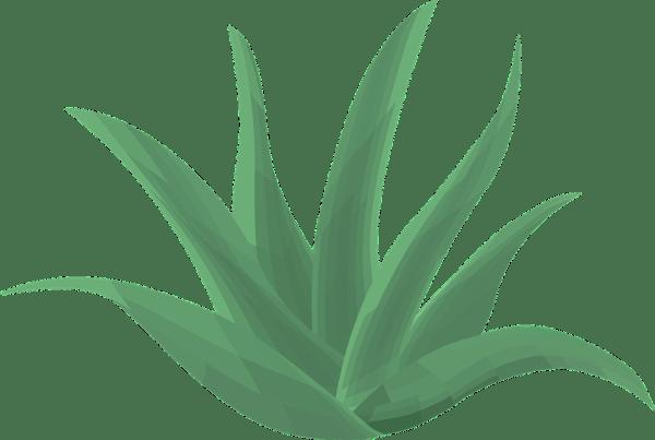 Aloe Vera Plant Green 183 Free vector graphic on Pixabay
