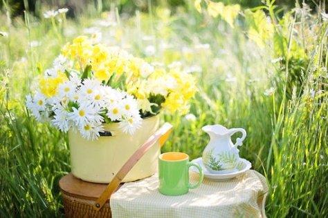 Margaridas, Verão, Flores, Natureza