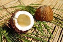 Kokosnuss, Nuss, Schale, Braun, Fruchtfleisch, Exotisch